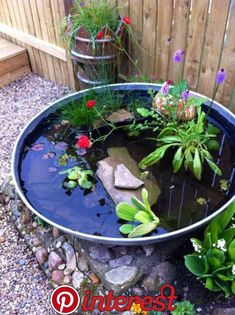 54 Indoor Pond Fish Ideas You Can Try In Your Home