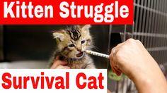 Kitten Struggle For Survival - Kitten Coming Back To Life