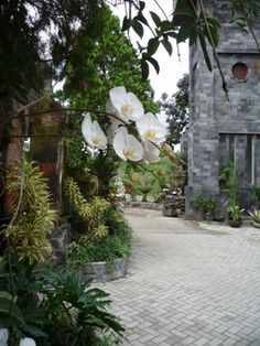 Ashram in Bali where I learnt BioEnergy Meditation...