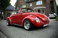 Cherry.... Very, very cherry. This is one sweet bug!