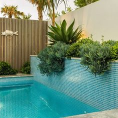 Another fantastic photo of our Greenhills pool and garden design #outdoors #outdoorliving #pool #pooldesign #planting #plantingdesign #garden #gardendesign #landscape #landscapearchitects #landscapearchitecture #landscapedesign #landscapeconstruction #fish #beautiful #green #Greenhills #theshire #sutherlandshire #coastal #cronulla #beach by sitedesign_studios Creative backyard pool designs.