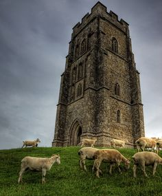 Glaston-baa-ry Tor Sheep graze around the century church tower that stands on to of Glastonbury Tor in Somerset. I even lugged my tripod (for once) up to the top of the Tor, and the moment I set it up, these guys decided to come & see what I was up to! Glastonbury England, Glastonbury Abbey, Watch Downton Abbey, Castles In England, British Country, Interesting Buildings, Pilgrimage, Places Around The World, Great Britain