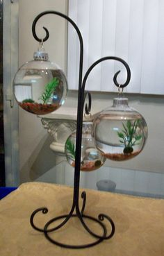 Marimo Moss Ball Terrarium, Mixture Of Small Stones, 3 Plastic Plants, Glass…