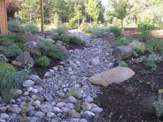 A dry creek bed complete with Australian natives This is almost
