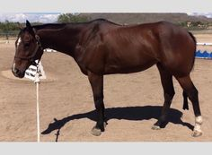 Is this cute gelding a solid Eventing prospect? This series will turn you into an expert at spotting talent at the racetrack... http://eventingconnect.today/2016/08/10/assessing-whether-an-ottb-will-make-a-good-eventing-prospect-seattle-memo/