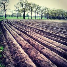 Akker #instagram #instagood #nature #Achterhoek - @ericburger_nl- #webstagram
