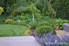 Ogród bacowej - strona 12 - Forum ogrodnicze - Ogrodowisko