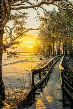 Мостик, деревья, снег и солнце.
