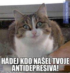 Kočičí svět - Vtipy a obrázky - Vtipy a obrázky *1