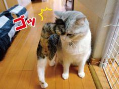 愛のカギシッポアタック!|うにオフィシャルブログ「うにの秘密基地」Powered by Ameba