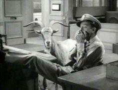 The Andy Griffith Show, the loaded Goat, Don Knotts Great Tv Shows, Old Tv Shows, Barney Fife, Don Knotts, The Originals Show, The Andy Griffith Show, Good Old Times, Ol Days, Classic Tv
