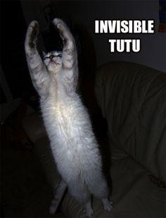 Invisible Cats, Invisible Tutu