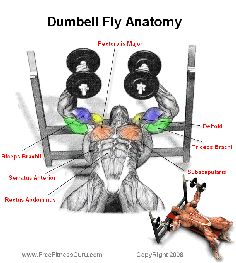 dumbell fly anatomy - #workouts for #men