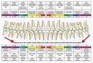 Bildergebnis für psychosomatik und zähne