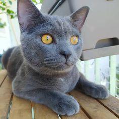 (📷 @thebestofsimba   ig) #petclubsa #nature #photography #catcontent #katzen #katzenliebe #catperson #catsoftheworld #cutekitten #instakatze #katt #cute #pet #petsofinstagram #catsofinstagram #catstagram #catoftheday #instacat #catlovers #instagood #catslove #catlover #caturday #thedailykitten #catlovers #catsofinsta #animals #adoptdontshop #worldofcutepets #cats 📍 Paris, France Grey Cats, Kittens Cutest, Cat Day, Paris France, Cats Of Instagram, Pet Supplies, Hug, Cat Lovers, Nature Photography