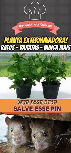 Coloque esta planta na sua casa e logo todos os ratos e baratas vão desaparecer!  #barata #rato #remediocaseiro #venenocaseiro #dicas #casa