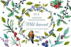 Wild harvest - Illustrations
