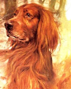 Irish Setter Vintage Dog art prints, Gifts and Artwork from ...
