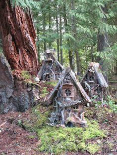 Gnome Stories at Whimsical Woods: Gnome Homes on a Big Old Cedar Stump