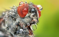 Over the last week here at DPS we challenged our writers to come up with a series of tutorials on the theme of Macro Photography. They certainly took the challenge and produced 9 fantastic articles on the topic. The Red by Regayip Koçak on 500px A few readers have asked for them to be all …