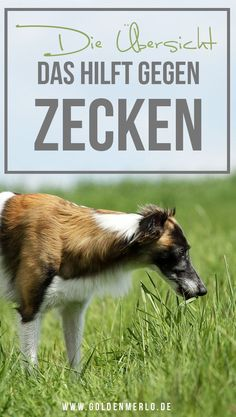 Merlin, Goats, Marvel, Animals, Outfit, Blog, Pets, Cat Breeds, Remove Ticks
