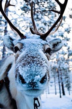 Snowy nose!