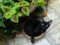 Miguel gato. Não cabe mais no vasinho.