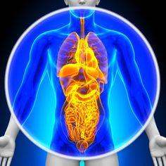 Jak detoxikovat všechny orgány těla Několik důvodů, proč jsou lidé postiženi nemocemi, jsou kvůli množství toxinů v těle, kyselým podmínkám těla a nedostatku životně důležitých živin. Vědět, že důležité je detoxikovat tělo a naplnit ho potravinami, které jsou celé a organické. To je jen jeden z důvodů, proč je proces detoxikace tak... Nuclear Reactor, Detox, Natural Remedies, Avocado, Health Fitness, Ethnic Recipes, Food, Middle