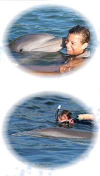 Swimming with Dolphins in Key Largo or maybe even the Bahamas is a must! This one goes on the list of Places to see... :)
