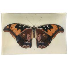 John Derian Company Inc — Brown Butterfly B