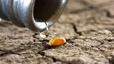 Water Scarcity - Google Search
