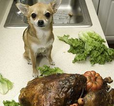 29 Dogs Ready To Celebrate Thanksgiving With You! [PICTURES] - DogTime