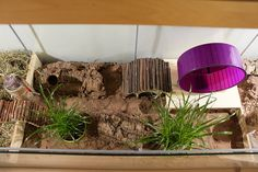 Hamster Tank, Hamster House, Hamster Stuff, Hamster Ideas, Pet Stuff, Syrian Hamster Cages, Dwarf Hamster Cages, Gerbil Cages, Animais