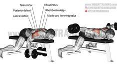 Lying dumbbell rear lateral raise exercise