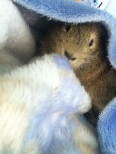Hairy Baby cuddling to blanket