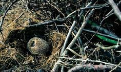 How to make a Wildlife Friendly Garden: Leaving garden debris in a corner of the garden gives a safe home to hibernating hedgehog (remember not to disturb them when you start to tidy up the garden for Spring though!)