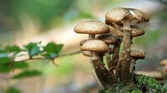 Fungi can be used to break down waste plastic and create sustainable building materials, according to scientists from Kew Gardens in London.The State of the World's Fungi 2018 report – the first of … Growing Mushrooms, Wild Mushrooms, Stuffed Mushrooms, Mushroom Plant, Maitake Mushroom, Kew Gardens, Landscape Photography Tips, Macro Photography, Getting Rid Of Crickets
