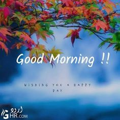 Good Morning Rose Images, Good Morning Beautiful Pictures, Good Morning Nature, Cute Good Morning, Good Morning Flowers, Morning Pictures, Morning Pics, Morning Wishes Quotes, Happy Sunday Quotes