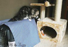 Tine the Lazy: Un copri-trasportino semplice ed economico - DIY cat carrier cover