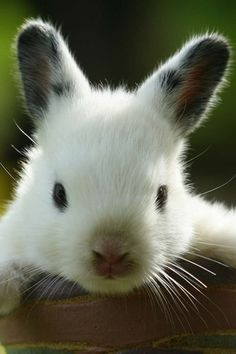 We can almost feel how soft this bunny's fur is. Awwww.