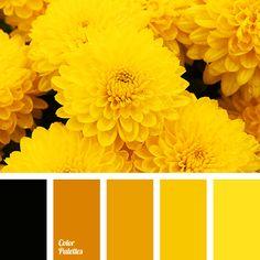 Color Palette #2665