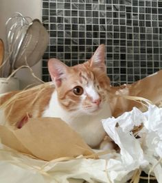Helping me unwrap my presents