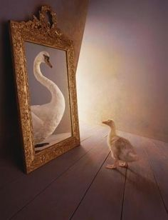 Do you still think you an ugly duckling who has not yet discovered the swan within?