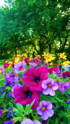 Bright and Colorful Petunias Calibrachoa for long lasting color.Plant Bright and Colorful Petunias Calibrachoa for long lasting color. Petunias, Flower Landscape, My Secret Garden, Colorful Garden, Dream Garden, Garden Inspiration, Beautiful Gardens, Planting Flowers, Flowers Garden