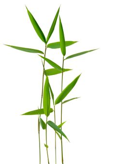 Imagen libre de derechos: Bamboo Leaves