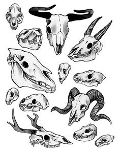 "caitlynkurilich: North American mammal, graphite, 11 inch x 17 inch .- caitlynkurilich: North American mammal, graphite, 11 ""x - Animal Skull Drawing, Animal Skulls, Tattoo Drawings, Art Drawings, Art Du Croquis, Arte Sketchbook, Bild Tattoos, Poses References, Arte Horror"