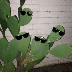 haha, this kind of makes me want a cactus. Photo Wall Collage, Picture Wall, Photowall Ideas, Plants Are Friends, Photocollage, Aesthetic Photo, Aesthetic Green, Plant Aesthetic, Rare Photos