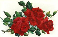 Vintage Red Rose Graphic 3 Rose Flower Clip Art With Leaves And Buds
