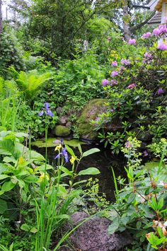 Water plants Garden Pond, Water Garden, Pond Water Features, Self Watering Planter, Spring Lake, Thinking Outside The Box, Aquatic Plants, Water Plants, Plant Care