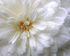 Photography  Flower Photograph  Nature Photography  by webteriors, $30.00